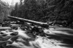 Papp-James_Nooksack-River-Relic-