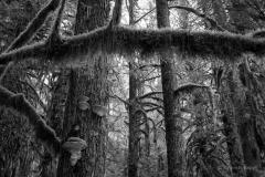 A Forest Chorus