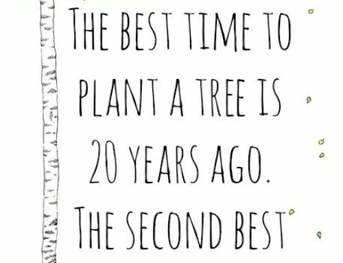 Happy Earth Day 2021… Plant Trees
